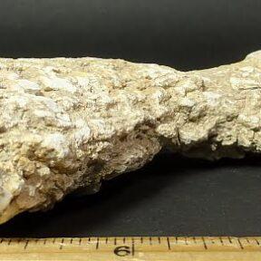 Petrified Limb Cast