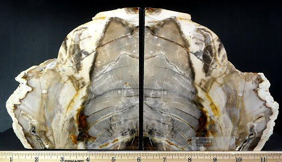 Cypress Petrified Wood bookends from Saddle Mountain, Washington