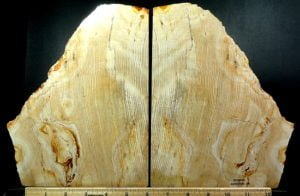 Sequoia Petrified Wood bookends from Ashwood, Oregon
