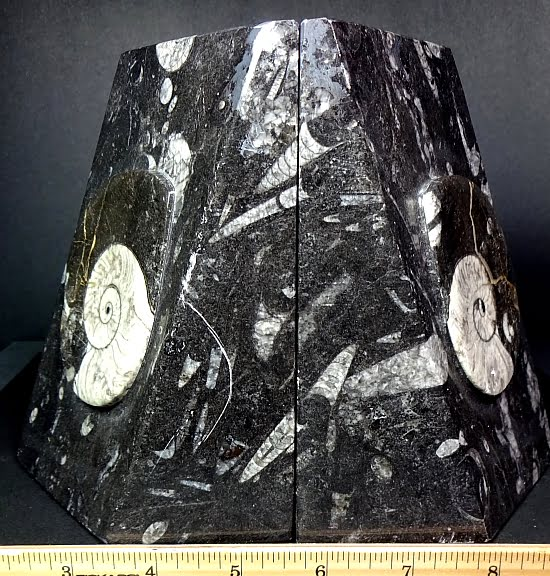 set of Black Geisonoceras bookends from Morocco
