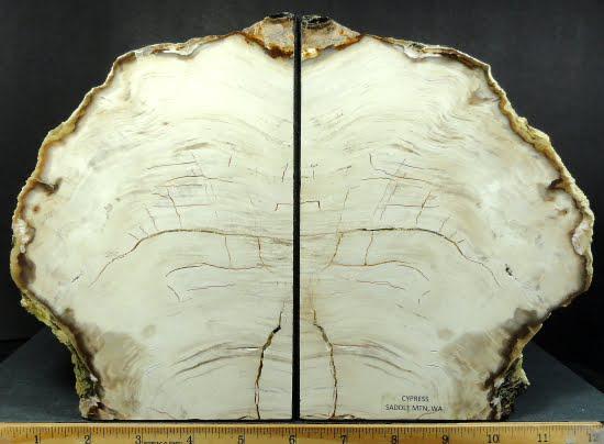 Cypress Petrified Wood bookends from Saddle Mt., Washington