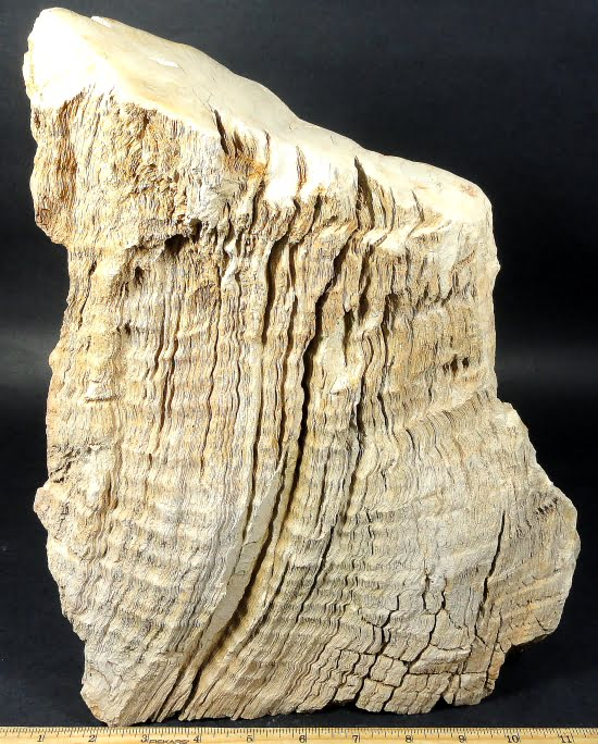 Petrified Wood  from Indonesia