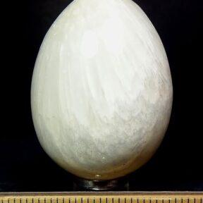 Scolecite egg