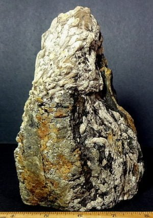 Toriedo Petrified Wood specimen with unusual Worm Holes from Nebraska